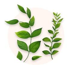 Verdure décorative