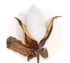 Flor de algodón